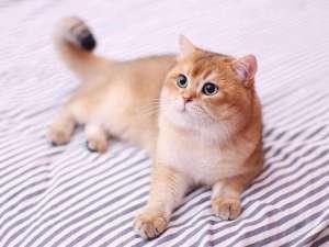 给猫咪吃生肉的好处和坏处