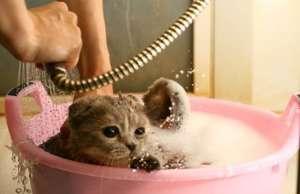 猫洗澡教学 美容及注意事项